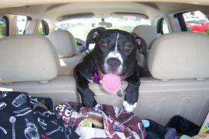 voyager en voiture avec un chien