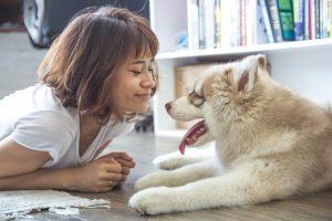 confiance du chien